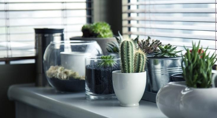 riconoscere le piante