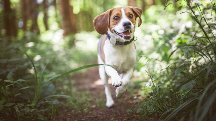 GPS per cani i migliori collari da comprare